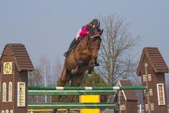 Vista delantera del caballo de salto Foto de archivo libre de regalías