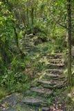 Treten Sie in den Wald Stockbilder