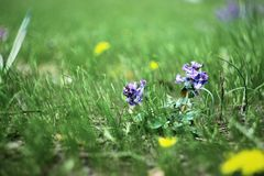 Trev und Blumen Stockbild