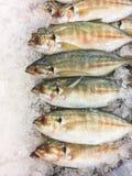 trevally黄色条纹鱼 库存照片