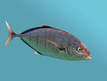 Trevally in blue background Stock Photography