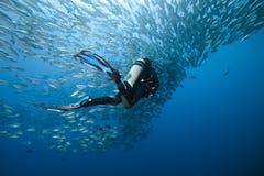 Trevally ed operatore subacqueo fotografia stock libera da diritti