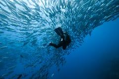 Trevally ed operatore subacqueo Immagini Stock Libere da Diritti