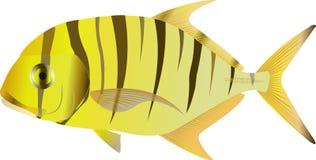Trevally Gnathanodon de oro libre illustration