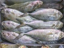 trevally Noir-réunis poissons ou sériole Noir-réunie mettez le togethe image stock