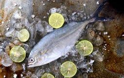 Trevally pescados frescos congelados Fotos de archivo