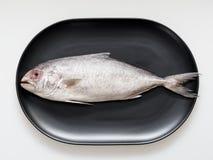 Trevally pesce crudo sul piatto ovale nero di forma isolato su fondo bianco Fotografia Stock Libera da Diritti