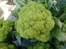 Trevi cauliflower, Brassica oleracea botrytis Stock Images