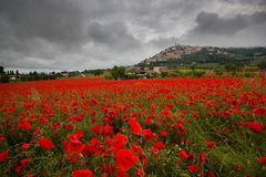 Trevi historic village view from beautiful field of red poppies in the spring season. Umbria royalty free stock photography