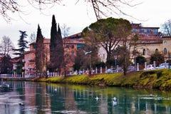 Treviso, een stad met vele stromen, die gastvrijheid aan talrijke diersoort geven die in kalmte onder mensen leeft stock afbeeldingen