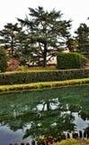 Treviso, een stad met vele stromen, die gastvrijheid aan talrijke diersoort geven die in kalmte onder mensen leeft stock fotografie
