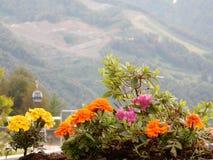 Trevlig bergblomsterrabatt Arkivbild