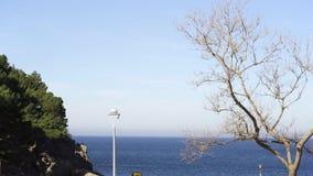 Trevlig blå himmel och det ändlösa blåa havet, träden och buskarna konst Ljus seascape med en lampa för ensam gata, ett träd och stock video