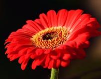 Trevlig blomma Royaltyfri Foto