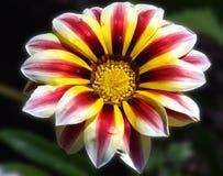 Trevlig blomma Arkivfoton