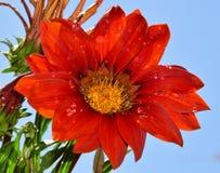 Trevlig blomma Arkivbild