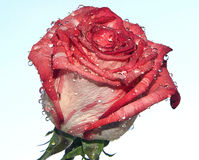 Trevlig blomma Arkivbilder