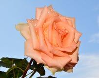 Trevlig blomma Royaltyfri Bild