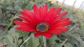 Trevlig blomma royaltyfria foton