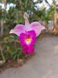 Trevlig blomma Fotografering för Bildbyråer