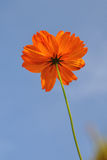 Trevlig blomma i sätta in Royaltyfri Fotografi