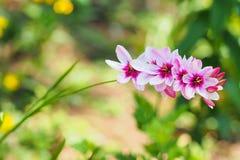 Trevlig blommacloseup i trädgården under dagtid Arkivbilder