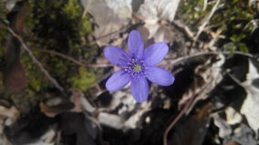 trevlig blommanatur Arkivfoto