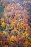 Trevlig bokträdskog i höst V Arkivfoton