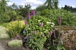 Trevlig botanisk trädgård arkivfoton
