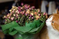 Trevlig bukett av torkade rosor och den röda katten Arkivfoto