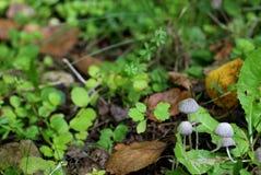 Trevlig champinjonfamilj i skog bland gräs Royaltyfri Fotografi