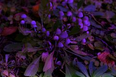 Trevlig champinjonfamilj i skog bland gräs Royaltyfri Bild