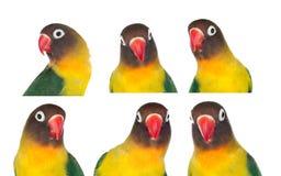 Trevlig följd med stående av en papegoja Arkivfoto
