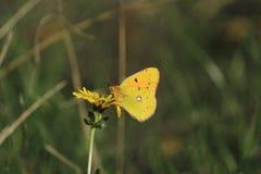 trevlig fjäril Arkivbild
