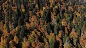Trevlig flyg- sikt av höstskogen i en walley Solen skiner in camera och skapar på den trevliga lappen av reflekterat ljus lager videofilmer