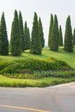 Trevlig form sörjer trädet Royaltyfria Bilder