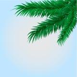 Trevlig frunch av granen på bakgrund Arkivfoto