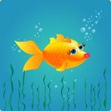 trevlig guldfisk Arkivfoto