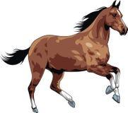 Trevlig häst stock illustrationer