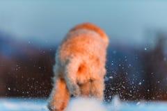 trevlig hund Arkivfoto