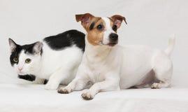 Trevlig hund med katten tillsammans på filten Royaltyfri Fotografi