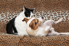 Trevlig hund med katten tillsammans på filten Royaltyfri Foto