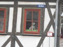 Trevlig hund på fönstret royaltyfria bilder