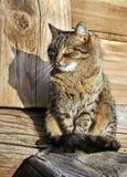 trevlig katt Arkivfoton