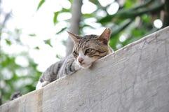 Trevlig katt Arkivbild