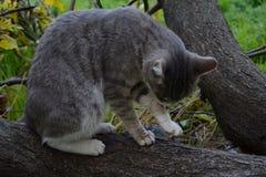 Trevlig katt på träd Arkivfoton