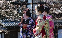 Trevlig kvinna tre i Maiko kimonoklänning Royaltyfri Fotografi