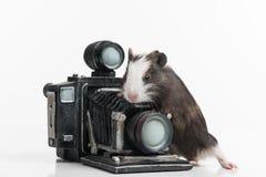 Trevlig liten hamster med retro photocamera Royaltyfri Foto