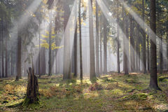 trevlig luftskogmorgon Arkivbild