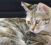 Trevlig närbild av en katt arkivbilder